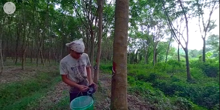 rubber plantation worker-1